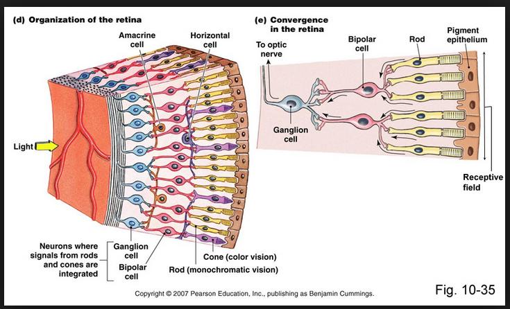 eye rod hillary clinton optics