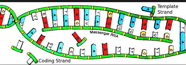messenger RNA leob railroad tracks 1